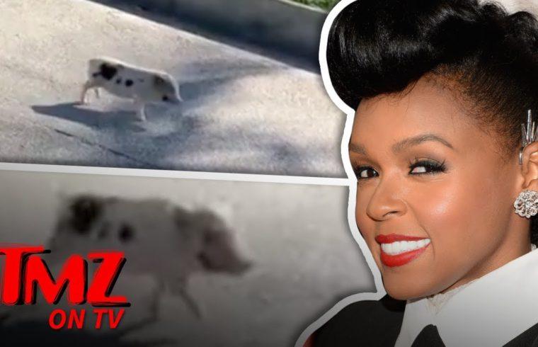 Janelle Monae Saves A Little Piggie! | TMZ TV 1