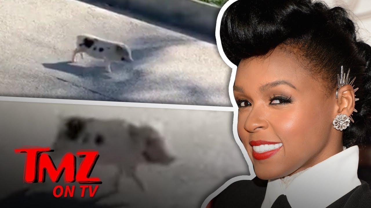 Janelle Monae Saves A Little Piggie! | TMZ TV 4