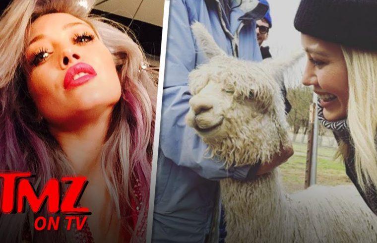 Hilary Duff Got An Alpaca For Valentine's Day | TMZ TV 1