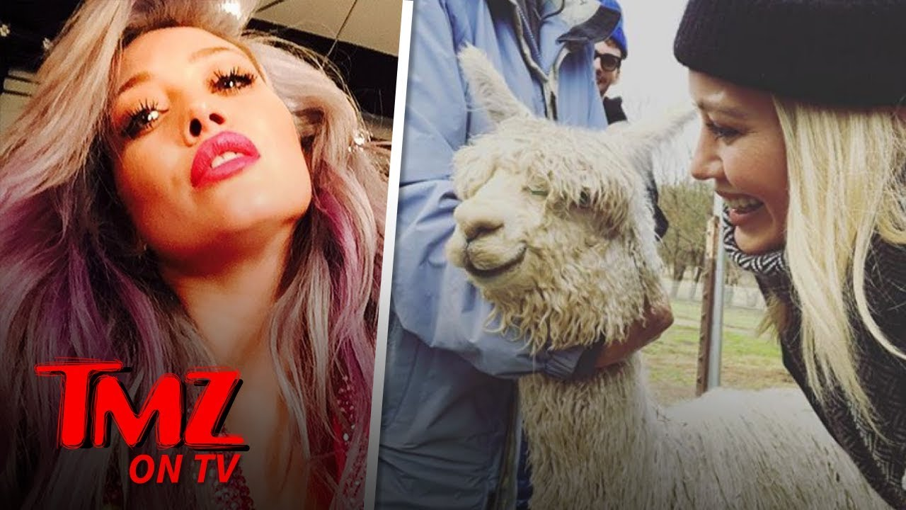 Hilary Duff Got An Alpaca For Valentine's Day | TMZ TV 5