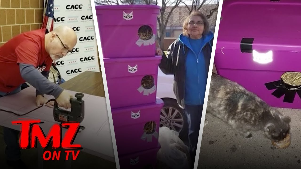 Polar Vortex Sparks Stray Cat Mission In Chicago | TMZ TV 3