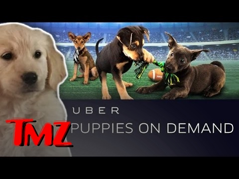 Uber Is Bringing You Puppies On Demand … But For Only One Day! | TMZ 5