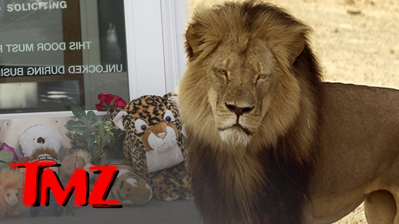 Cecil the Lion: Bones Will Become a Memorial | TMZ 5