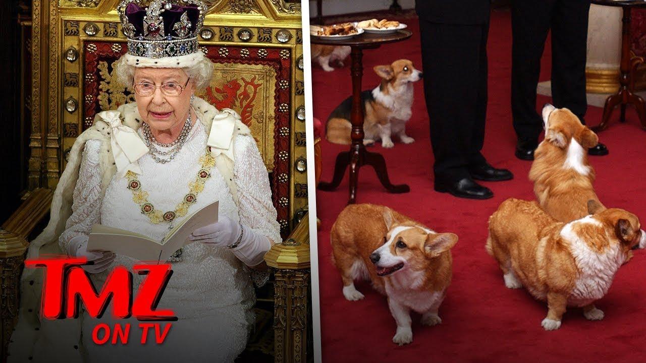 Queen Elizabeth's Dog Passes Away | TMZ TV 1