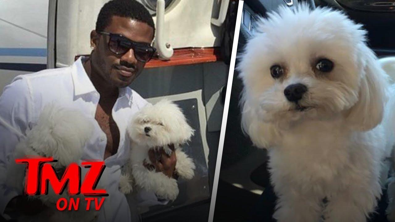 Ray J Says Dognapper Nabbed His Sweet Pooch! | TMZ TV 1