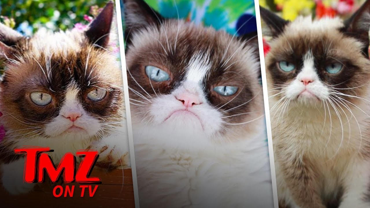 Grumpy Cat Has Died | TMZ TV 3